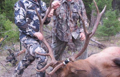 Elk Game Hunting Rental